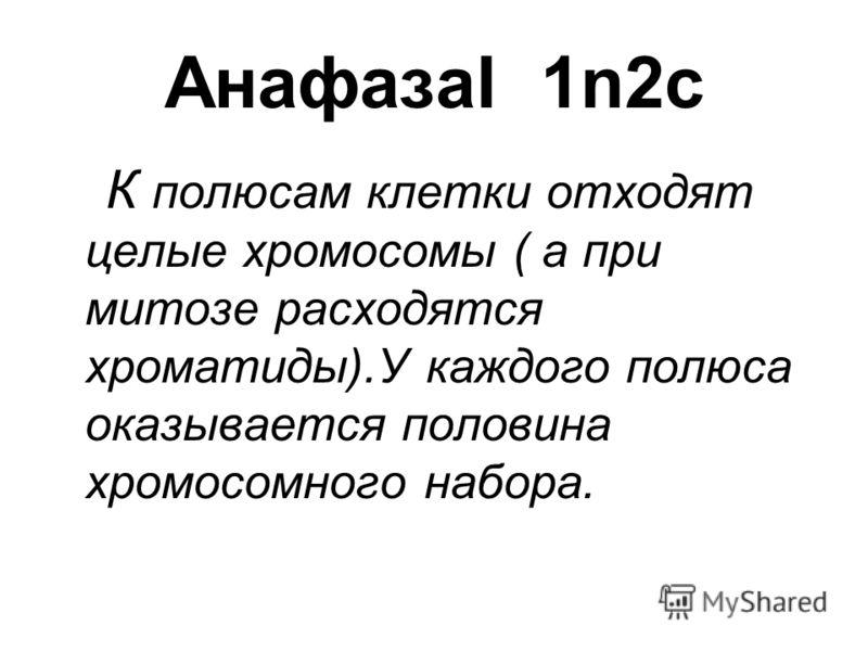 АнафазаI 1n2c К полюсам клетки отходят целые хромосомы ( а при митозе расходятся хроматиды).У каждого полюса оказывается половина хромосомного набора.