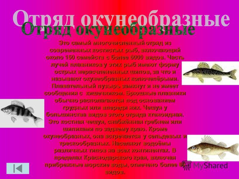 Это самый многочисленный отряд из современных костистых рыб, включающий около 150 семейств с более 6000 видов. Часть лучей плавников у этих рыб имеют форму острых нерасчлененных шипов, за что и называют окунеобразных колючепёрыми. Плавательный пузырь