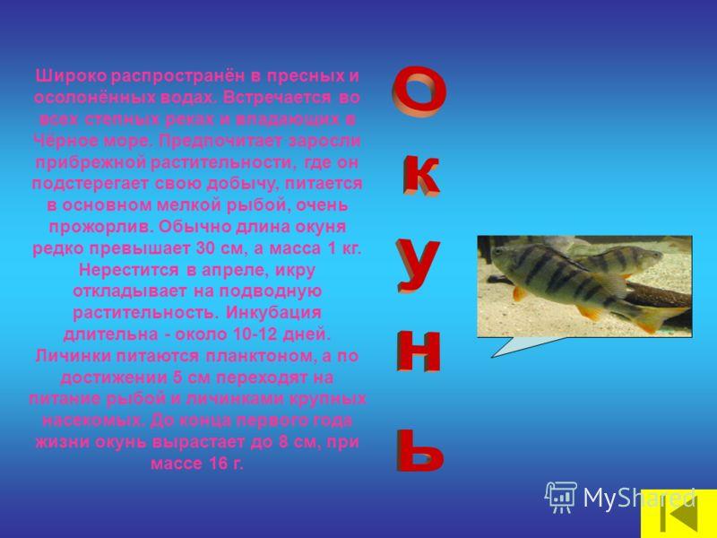 Широко распространён в пресных и осолонённых водах. Встречается во всех степных реках и впадающих в Чёрное море. Предпочитает заросли прибрежной растительности, где он подстерегает свою добычу, питается в основном мелкой рыбой, очень прожорлив. Обычн