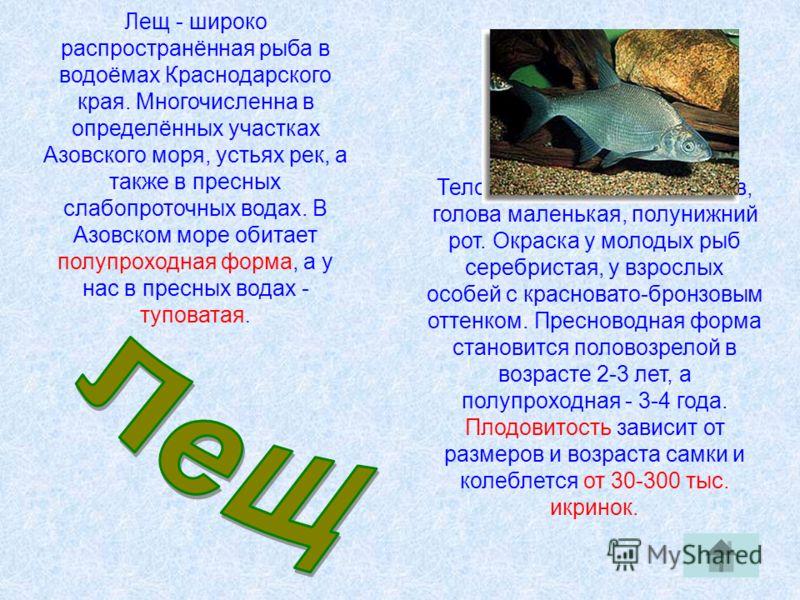 Лещ - широко распространённая рыба в водоёмах Краснодарского края. Многочисленна в определённых участках Азовского моря, устьях рек, а также в пресных слабопроточных водах. В Азовском море обитает полупроходная форма, а у нас в пресных водах - тупова