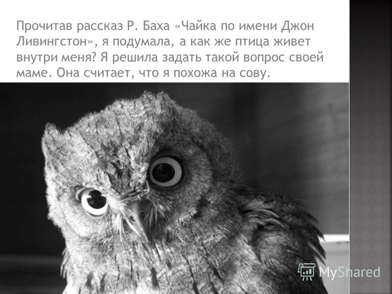 Прочитав рассказ Р. Баха «Чайка по имени Джон Ливингстон», я подумала, а как же птица живет внутри меня? Я решила задать такой вопрос своей маме. Она считает, что я похожа на сову.