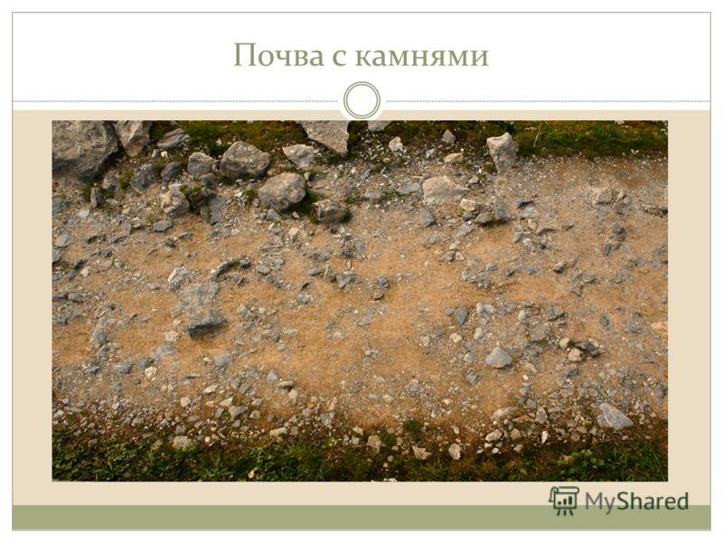Почва с камнями