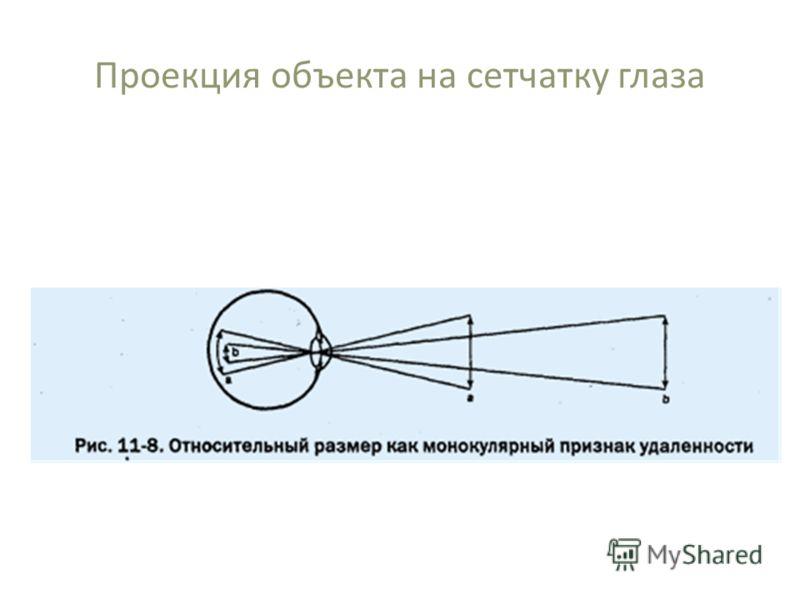 Проекция объекта на сетчатку глаза