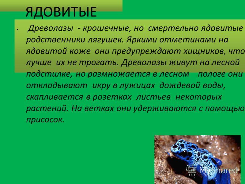 ЯДОВИТЫЕ ДРЕВОЛАЗЫ. Древолазы - крошечные, но смертельно ядовитые родственники лягушек. Яркими отметинами на ядовитой коже они предупреждают хищников, что лучше их не трогать. Древолазы живут на лесной подстилке, но размножается в лесном пологе они о
