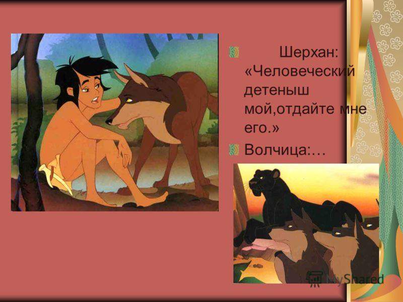 Шерхан: «Человеческий детеныш мой,отдайте мне его.» Волчица:…