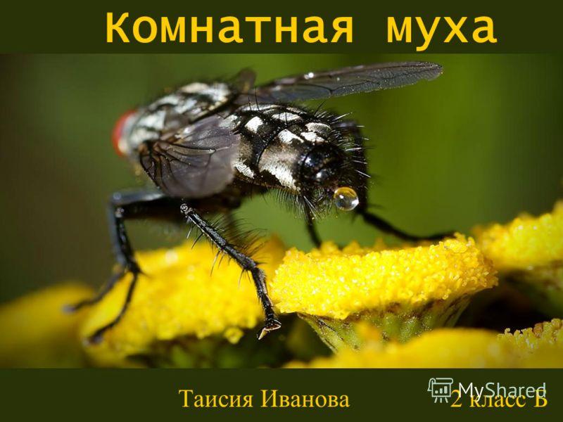 Комнатная муха Таисия Иванова 2 класс Б