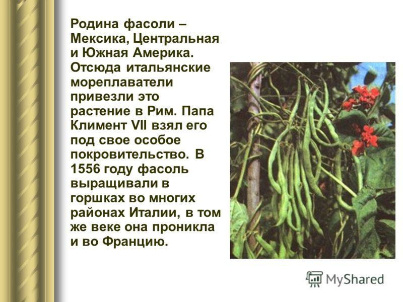 Родина фасоли – Мексика, Центральная и Южная Америка. Отсюда итальянские мореплаватели привезли это растение в Рим. Папа Климент VII взял его под свое особое покровительство. В 1556 году фасоль выращивали в горшках во многих районах Италии, в том же