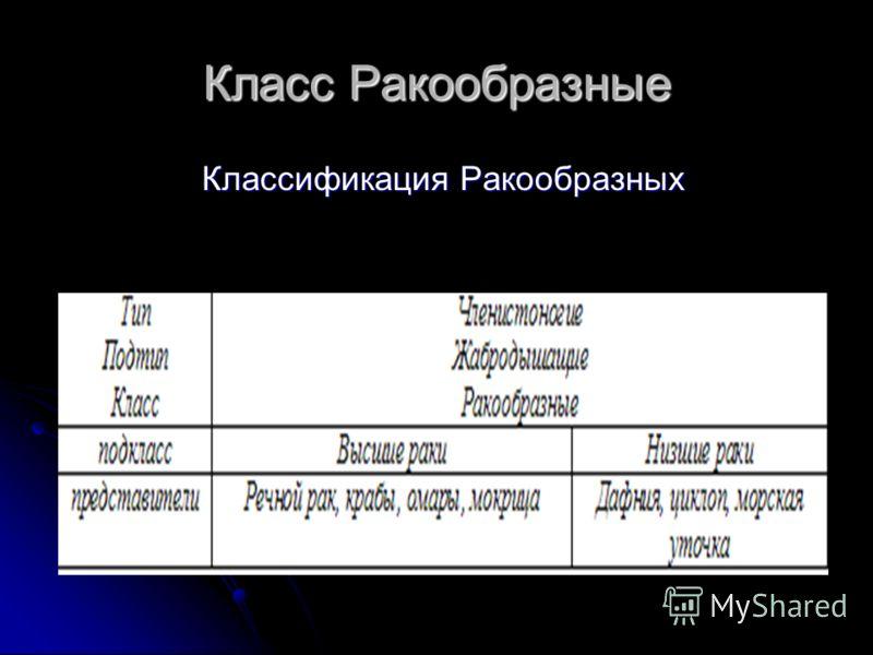 Класс Ракообразные Классификация Ракообразных