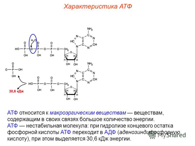 АТФ относится к макроэргическим веществам веществам, содержащим в своих связях большое количество энергии. АТФ нестабильная молекула: при гидролизе концевого остатка фосфорной кислоты АТФ переходит в АДФ (аденозиндифосфорную кислоту), при этом выделя