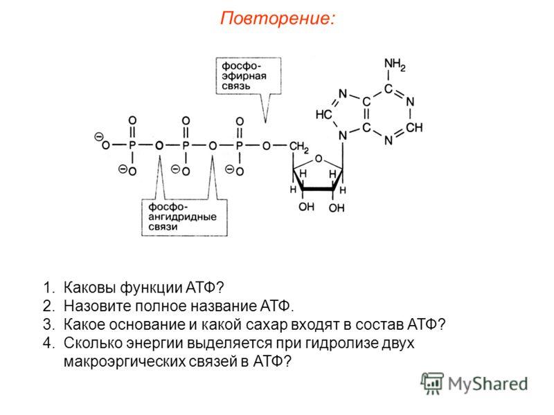 1.Каковы функции АТФ? 2.Назовите полное название АТФ. 3.Какое основание и какой сахар входят в состав АТФ? 4.Сколько энергии выделяется при гидролизе двух макроэргических связей в АТФ?
