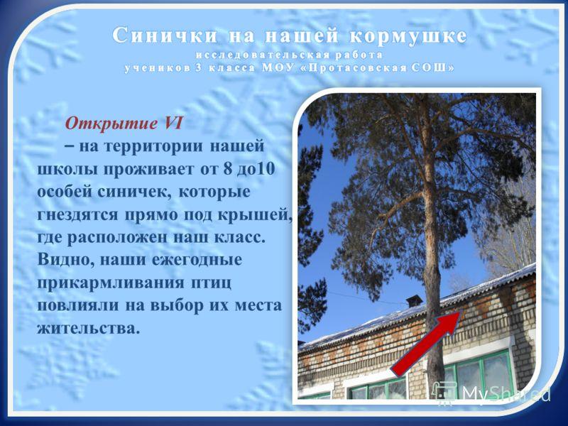 Открытие VI – на территории нашей школы проживает от 8 до10 особей синичек, которые гнездятся прямо под крышей, где расположен наш класс. Видно, наши ежегодные прикармливания птиц повлияли на выбор их места жительства.