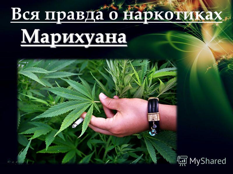 Вся правда о наркотиках Марихуана