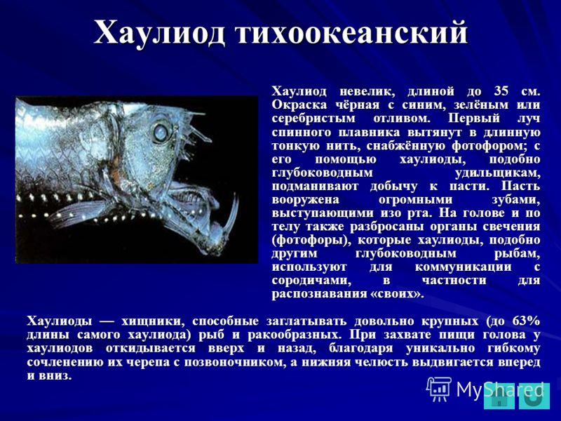 Хаулиод тихоокеанский Хаулиод невелик, длиной до 35 см. Окраска чёрная с синим, зелёным или серебристым отливом. Первый луч спинного плавника вытянут в длинную тонкую нить, снабжённую фотофором; с его помощью хаулиоды, подобно глубоководным удильщика