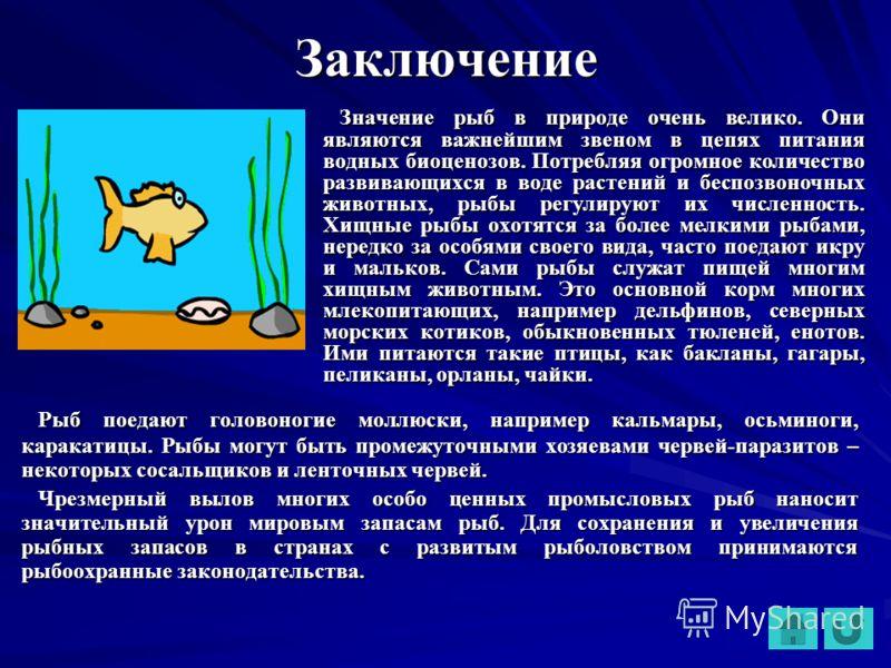 Заключение Значение рыб в природе очень велико. Они являются важнейшим звеном в цепях питания водных биоценозов. Потребляя огромное количество развивающихся в воде растений и беспозвоночных животных, рыбы регулируют их численность. Хищные рыбы охотят