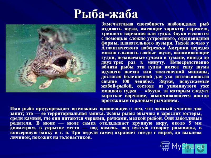 Рыба-жаба Замечательна способность жабовидных рыб издавать звуки, имеющие характер скрежета, хриплого ворчания или гудка. Звуки издаются с помощью сложно устроенного, сердцевидной формы, плавательного пузыря. Тихой ночью у Атлантического побережья Ам