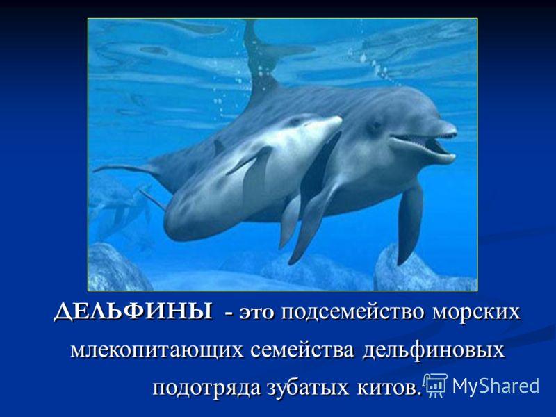 ДЕЛЬФИНЫ - это подсемейство морских млекопитающих семейства дельфиновых подотряда зубатых китов.