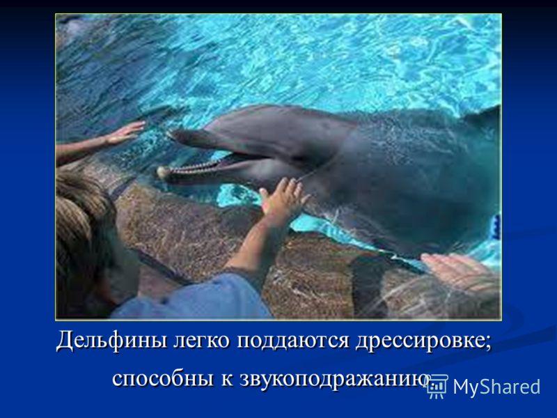 Дельфины легко поддаются дрессировке; способны к звукоподражанию. Дельфины легко поддаются дрессировке; способны к звукоподражанию.