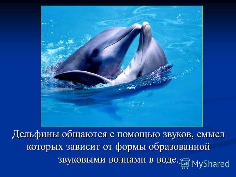 Дельфины общаются с помощью звуков, смысл которых зависит от формы образованной звуковыми волнами в воде. Дельфины общаются с помощью звуков, смысл которых зависит от формы образованной звуковыми волнами в воде.