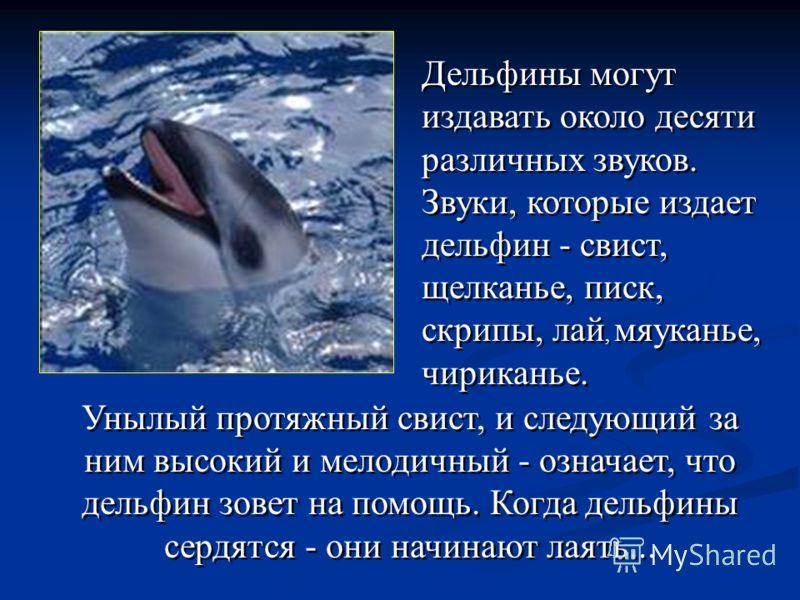 Унылый протяжный свист, и следующий за ним высокий и мелодичный - означает, что дельфин зовет на помощь. Когда дельфины сердятся - они начинают лаять... Дельфины могут издавать около десяти различных звуков. Звуки, которые издает дельфин - свист, щел