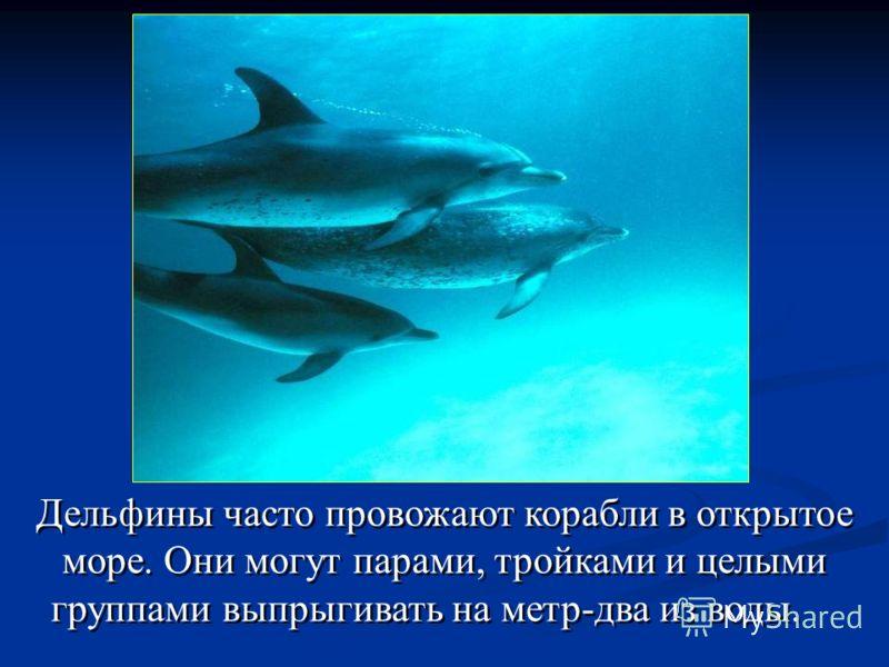 Дельфины часто провожают корабли в открытое море. Они могут парами, тройками и целыми группами выпрыгивать на метр-два из воды.