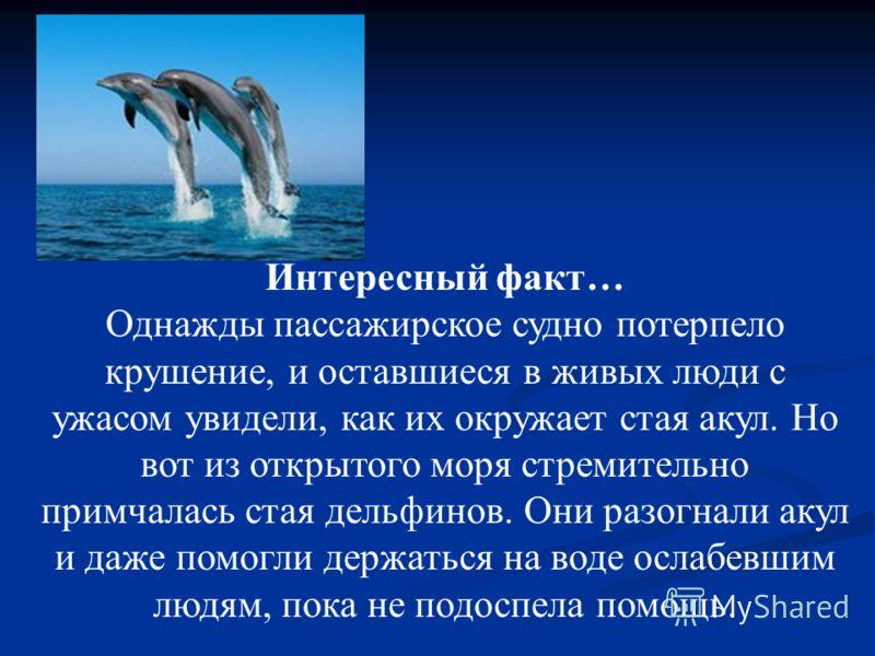 Интересный факт… Однажды пассажирское судно потерпело крушение, и оставшиеся в живых люди с ужасом увидели, как их окружает стая акул. Но вот из открытого моря стремительно примчалась стая дельфинов. Они разогнали акул и даже помогли держаться на вод