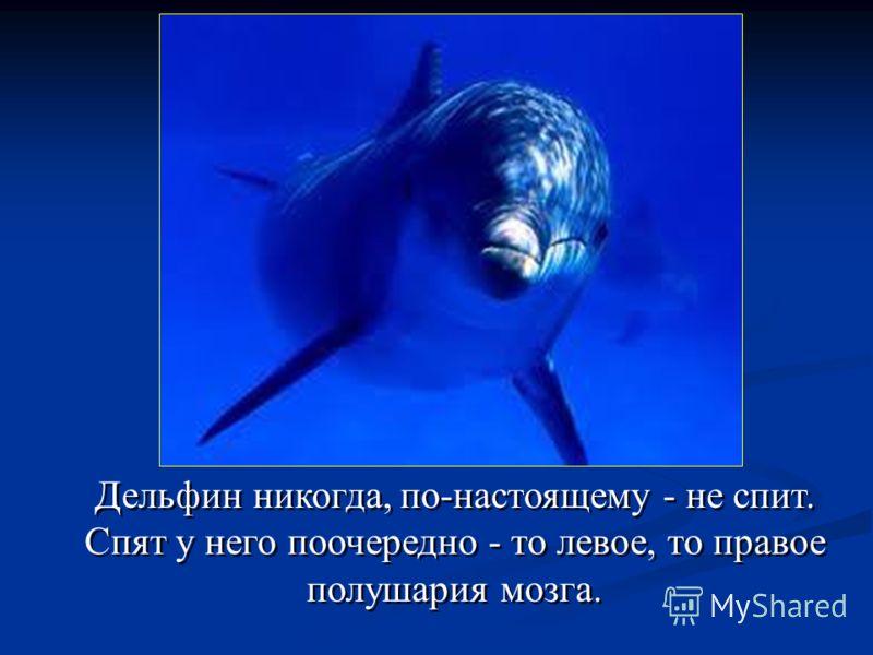 Дельфин никогда, по-настоящему - не спит. Спят у него поочередно - то левое, то правое полушария мозга.