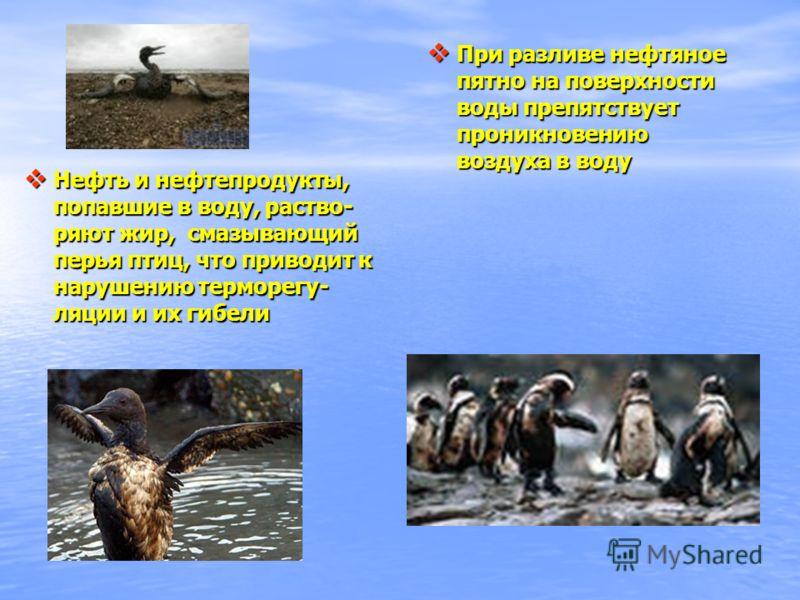 При разливе нефтяное пятно на поверхности воды препятствует проникновению воздуха в воду При разливе нефтяное пятно на поверхности воды препятствует проникновению воздуха в воду Нефть и нефтепродукты, попавшие в воду, раство- ряют жир, смазывающий пе