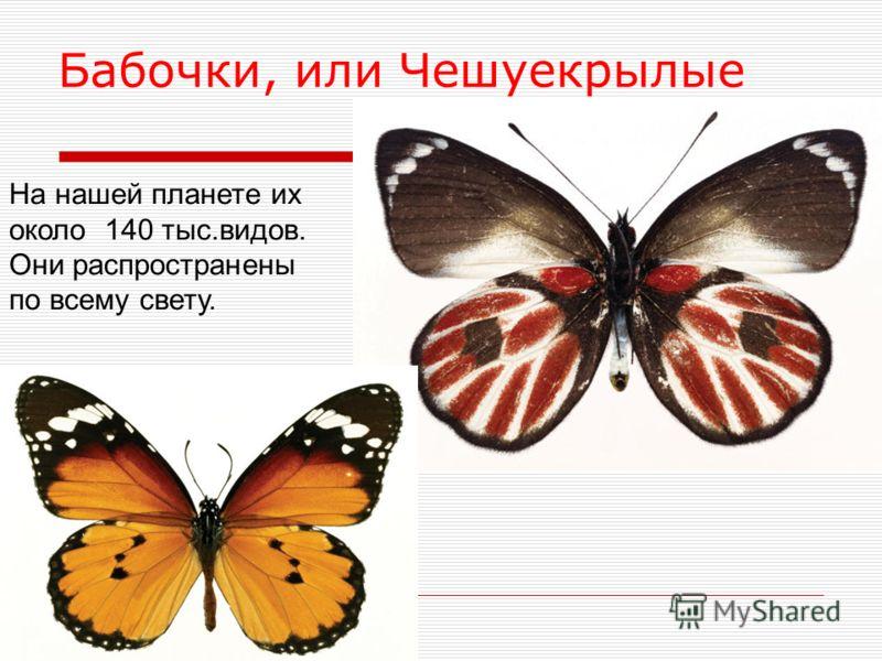 Бабочки, или Чешуекрылые На нашей планете их около 140 тыс.видов. Они распространены по всему свету.