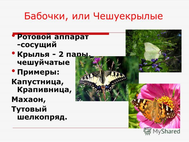 Ротовой аппарат -сосущий Крылья - 2 пары, чешуйчатые Примеры: Капустница, Крапивница, Махаон, Тутовый шелкопряд. Бабочки, или Чешуекрылые