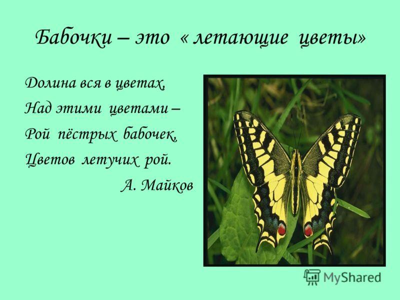 Бабочки – это « летающие цветы» Долина вся в цветах, Над этими цветами – Рой пёстрых бабочек, Цветов летучих рой. А. Майков