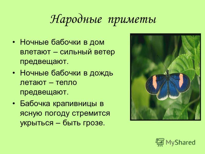 Народные приметы Ночные бабочки в дом влетают – сильный ветер предвещают. Ночные бабочки в дождь летают – тепло предвещают. Бабочка крапивницы в ясную погоду стремится укрыться – быть грозе.