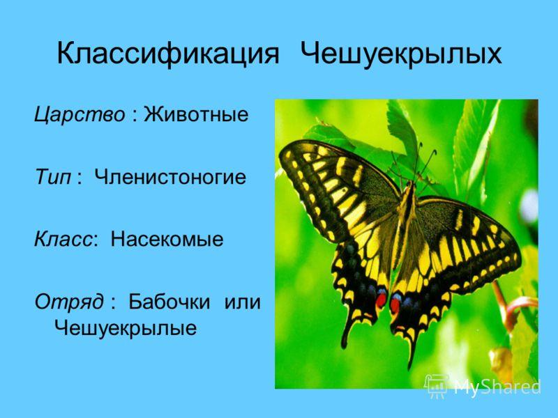 Классификация Чешуекрылых Царство : Животные Тип : Членистоногие Класс: Насекомые Отряд : Бабочки или Чешуекрылые