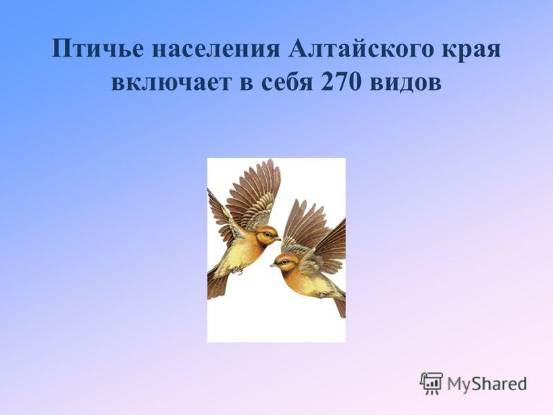 Птичье населения Алтайского края включает в себя 270 видов