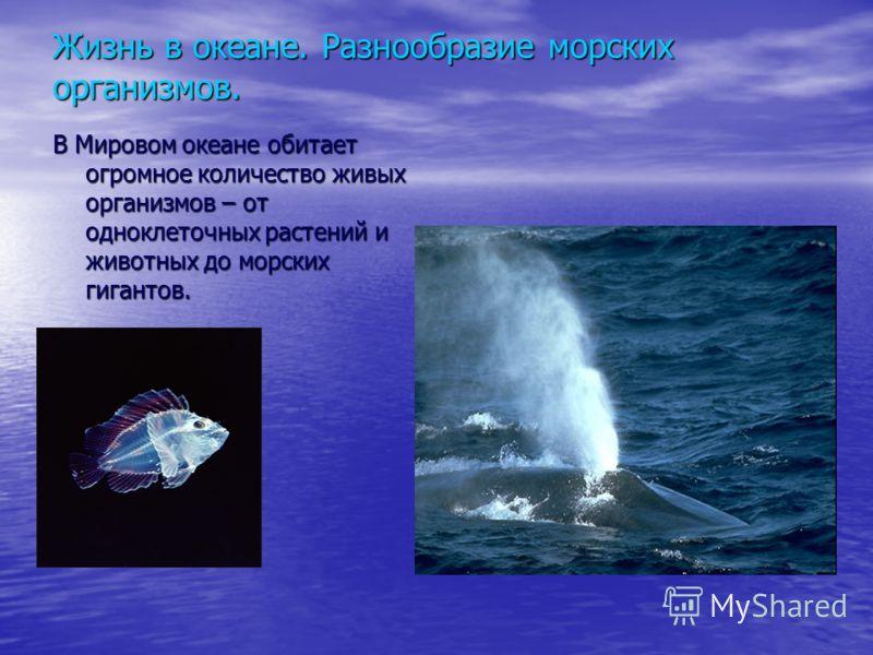 Жизнь в океане. Разнообразие морских организмов. В Мировом океане обитает огромное количество живых организмов – от одноклеточных растений и животных до морских гигантов.