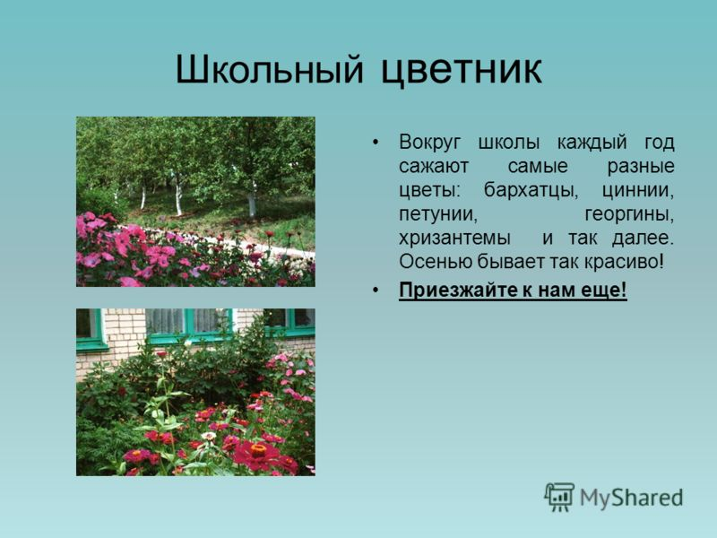 Школьный цветник Вокруг школы каждый год сажают самые разные цветы: бархатцы, циннии, петунии, георгины, хризантемы и так далее. Осенью бывает так красиво! Приезжайте к нам еще!
