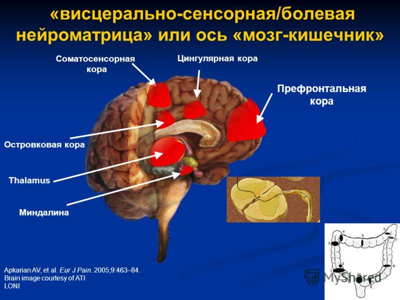 Apkarian AV, et al. Eur J Pain. 2005;9:463–84. Brain image courtesy of ATI LONI Префронтальная кора Thalamus «висцерально-сенсорная/болевая нейроматрица» или ось «мозг-кишечник» Миндалина Соматосенсорная кора Цингулярная кора Островковая кора
