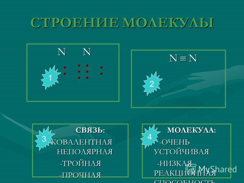 СТРОЕНИЕ МОЛЕКУЛЫ N N N N N N СВЯЗЬ: -КОВАЛЕНТНАЯ НЕПОЛЯРНАЯ -ТРОЙНАЯ -ПРОЧНАЯ МОЛЕКУЛА: -ОЧЕНЬ УСТОЙЧИВАЯ -НИЗКАЯ РЕАКЦИОННАЯ СПОСОБНОСТЬ 1 3 4 2