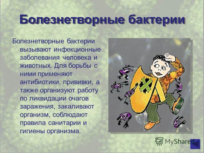 Болезнетворные бактерии Болезнетворные бактерии вызывают инфекционные заболевания человека и животных. Для борьбы с ними применяют антибиотики, прививки, а также организуют работу по ликвидации очагов заражения, закаливают организм, соблюдают правила