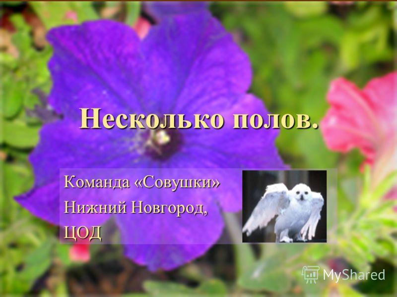 Несколько полов. Команда «Совушки» Нижний Новгород, ЦОД