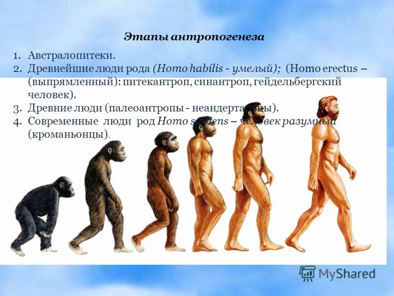 Этапы антропогенеза 1.Австралопитеки. 2.Древнейшие люди рода (Homo habilis - умелый); (Homo erectus – (выпрямленный): питекантроп, синантроп, гейдельбергский человек). 3.Древние люди (палеоантропы - неандертальцы). 4.Современные люди род Homo sapiens
