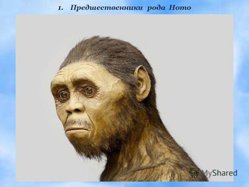 1.Предшественники рода Homo