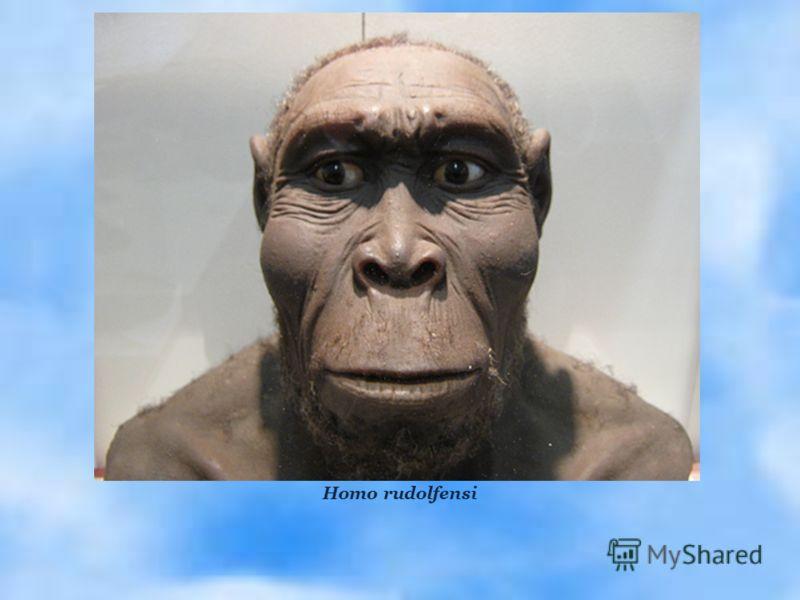 Homo rudolfensi