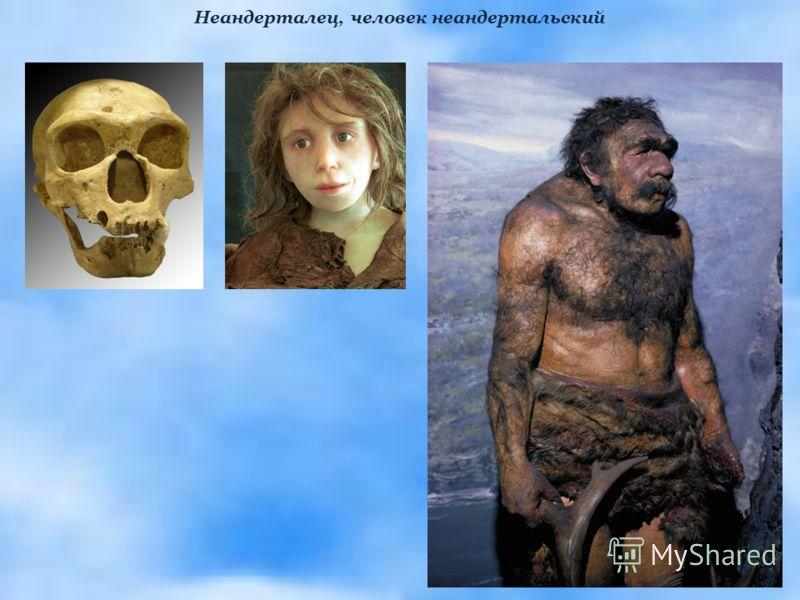 Неандерталец, человек неандертальский