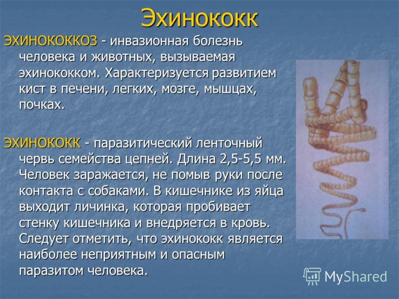 Эхинококк ЭХИНОКОККОЗ - инвазионная болезнь человека и животных, вызываемая эхинококком. Характеризуется развитием кист в печени, легких, мозге, мышцах, почках. ЭХИНОКОКК - паразитический ленточный червь семейства цепней. Длина 2,5-5,5 мм. Человек за