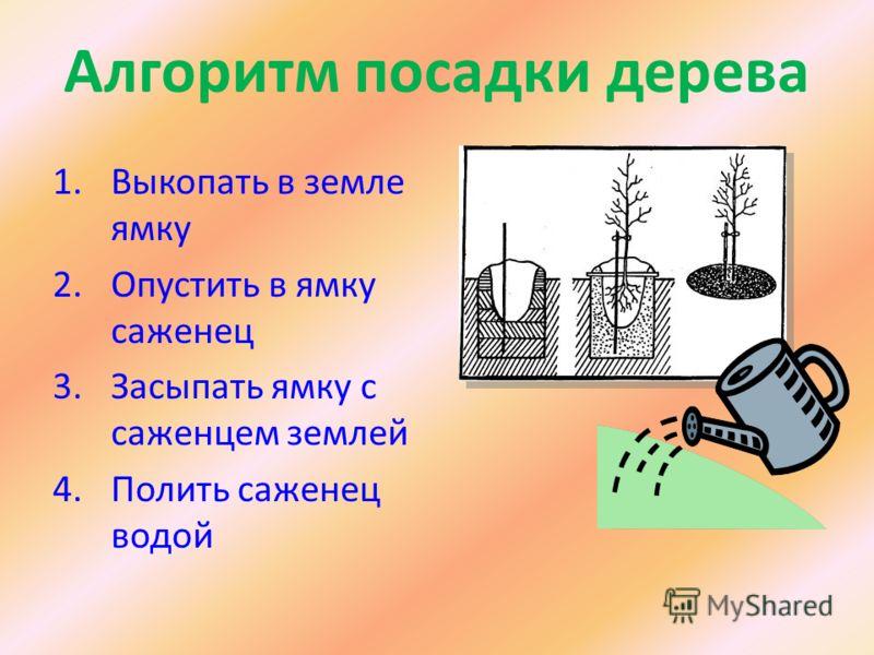 Алгоритм посадки дерева 1.Выкопать в земле ямку 2.Опустить в ямку саженец 3.Засыпать ямку с саженцем землей 4.Полить саженец водой