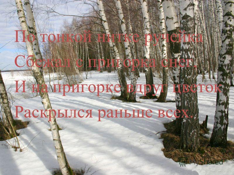 По тонкой нитке ручейка Сбежал с пригорка снег, И на пригорке вдруг цветок Раскрылся раньше всех.