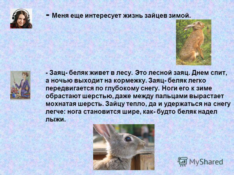 - Меня еще интересует жизнь зайцев зимой. - Заяц- беляк живет в лесу. Это лесной заяц. Днем спит, а ночью выходит на кормежку. Заяц- беляк легко передвигается по глубокому снегу. Ноги его к зиме обрастают шерстью, даже между пальцами вырастает мохнат
