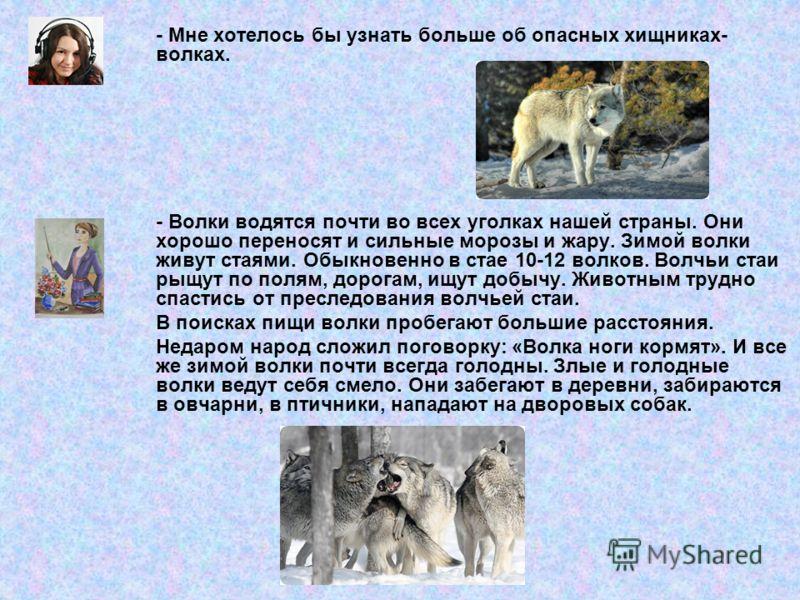 - Мне хотелось бы узнать больше об опасных хищниках- волках. - Волки водятся почти во всех уголках нашей страны. Они хорошо переносят и сильные морозы и жару. Зимой волки живут стаями. Обыкновенно в стае 10-12 волков. Волчьи стаи рыщут по полям, доро