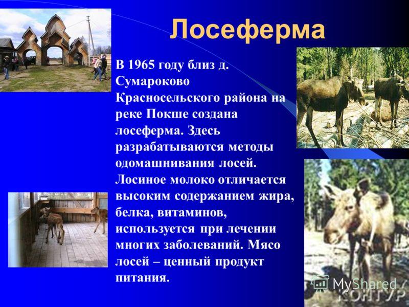В 1965 году близ д. Сумароково Красносельского района на реке Покше создана лосеферма. Здесь разрабатываются методы одомашнивания лосей. Лосиное молоко отличается высоким содержанием жира, белка, витаминов, используется при лечении многих заболеваний