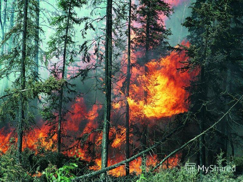 За 100 лет площадь лесов сократилась в 2 раза 1 минута – 20 гектаров леса